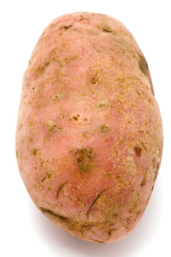 μακρο πατάτες στοκ εικόνες