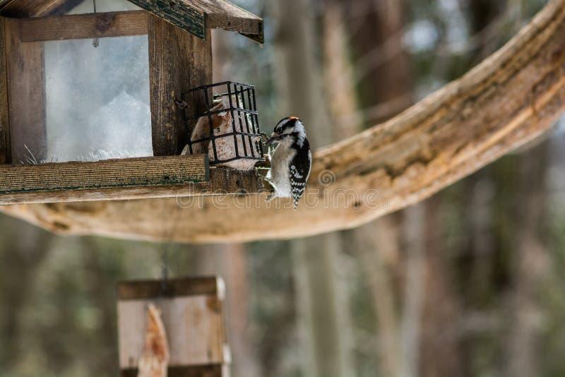 Μακρο πουλί στοκ φωτογραφία