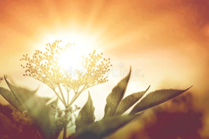 Μακρο πυροβολισμός του άγριου λουλουδιού στο φως ηλιοβασιλέματος στοκ εικόνες με δικαίωμα ελεύθερης χρήσης