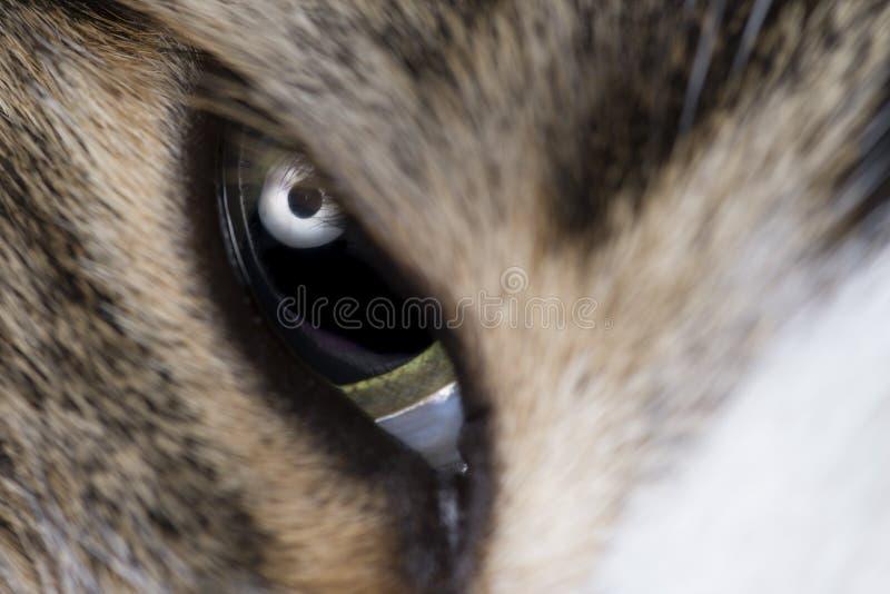 Μακρο πυροβολισμός ματιών γατών στοκ εικόνα με δικαίωμα ελεύθερης χρήσης