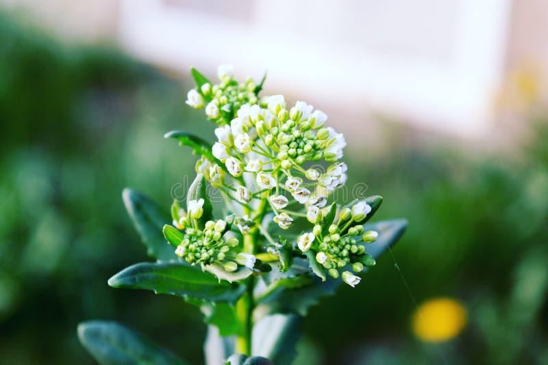 Μακρο πυροβολισμός λουλουδιών στοκ φωτογραφία με δικαίωμα ελεύθερης χρήσης