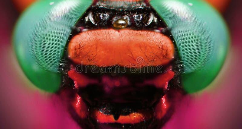 Μακρο πυροβολισμός: τεμάχιο του κεφαλιού μιας λιβελλούλης στοκ φωτογραφία