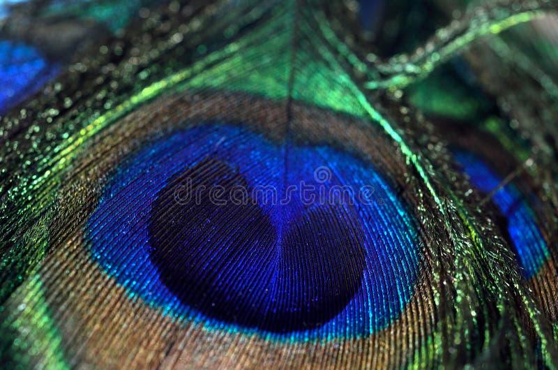 Μακρο πυροβολισμός φτερών Peacock στοκ φωτογραφίες