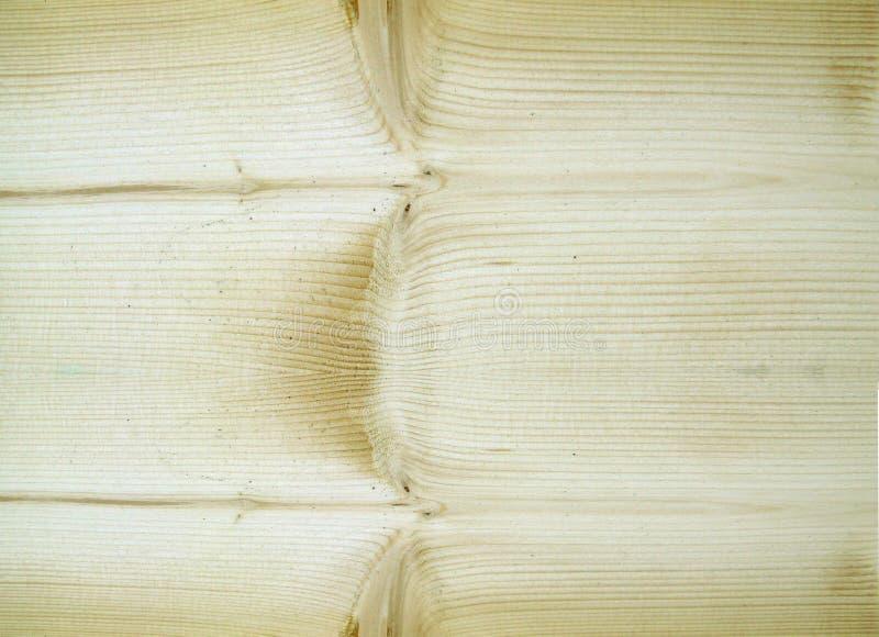 μακρο σανίδα πεύκων στοκ εικόνα με δικαίωμα ελεύθερης χρήσης