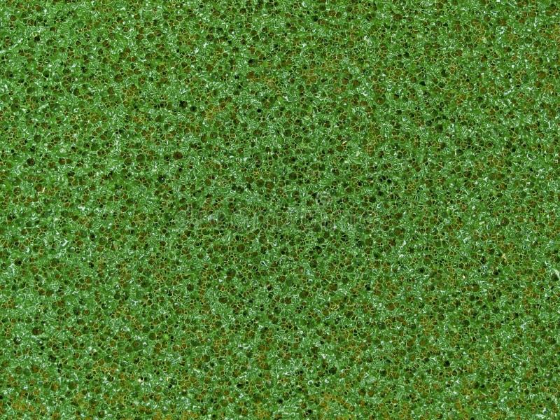 Μακρο σύσταση - οικογένεια - πράσινο scrubbie στοκ εικόνα