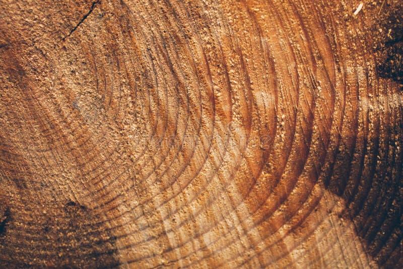 Μακρο σύσταση του κομμένου κορμού δέντρων Κολόβωμα του δέντρου πεύκων ξύλινα σύσταση και υπόβαθρο για το σχέδιο Οργανικές συστάσε στοκ φωτογραφία με δικαίωμα ελεύθερης χρήσης
