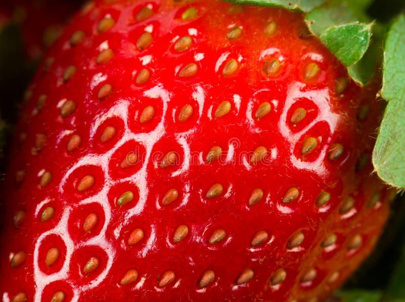 Download μακρο φράουλα στοκ εικόνα. εικόνα από closeup, κόκκινος - 22796715
