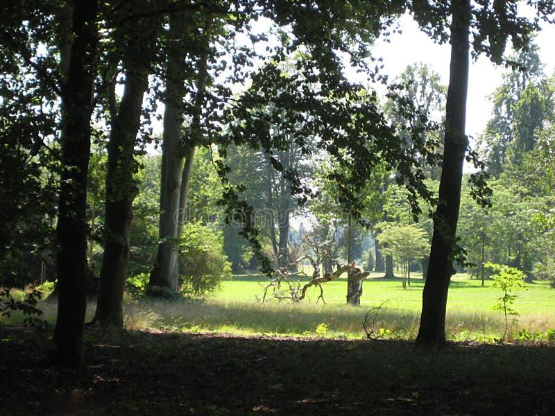 Μακρο φωτογραφία με το διακοσμητικό υπόβαθρο τοπίων της θερινής ηλιόλουστης ημέρας στο παλαιό ιστορικό πάρκο του SAN Susi στο Πότ στοκ φωτογραφία με δικαίωμα ελεύθερης χρήσης