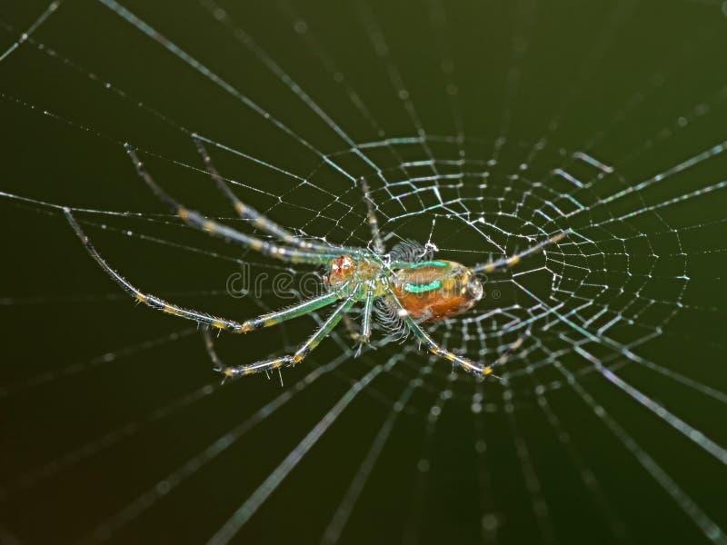 Μακρο φωτογραφία της ζωηρόχρωμης αράχνης στον Ιστό που απομονώνεται σε μουτζουρωμένο Backgro στοκ εικόνες