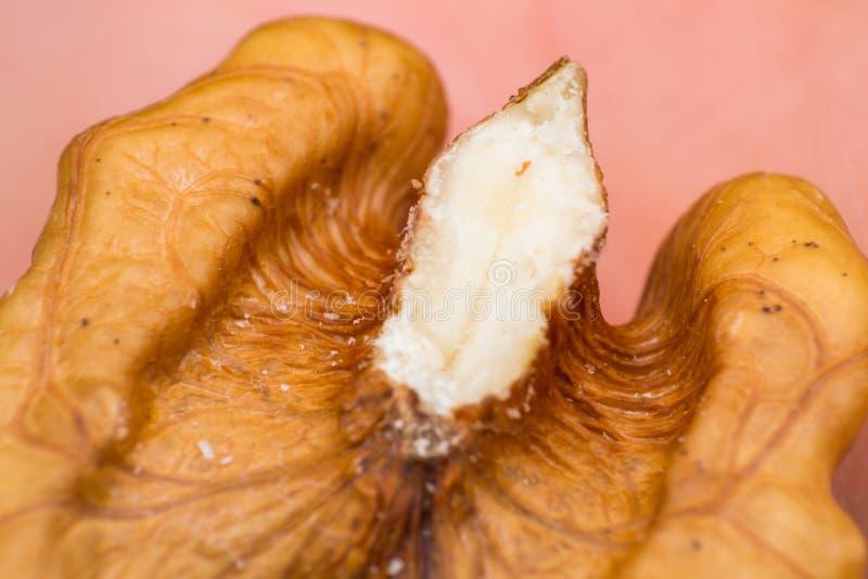 Μακρο φωτογραφία των λεπτομερειών ξύλων καρυδιάς στοκ φωτογραφία με δικαίωμα ελεύθερης χρήσης