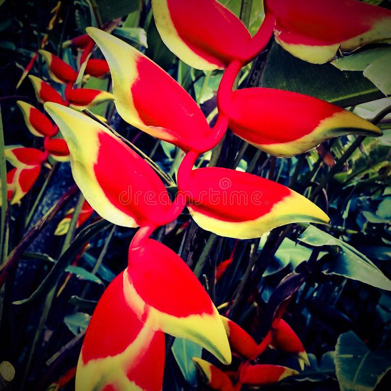 Μακρο φωτογραφία των λουλουδιών φύσης ` s στοκ φωτογραφία με δικαίωμα ελεύθερης χρήσης