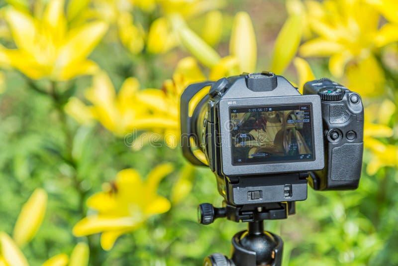 Μακρο φωτογραφία των λουλουδιών ψηφιακή παρουσίαση LCD φωτογραφικών μηχανών στοκ φωτογραφία με δικαίωμα ελεύθερης χρήσης