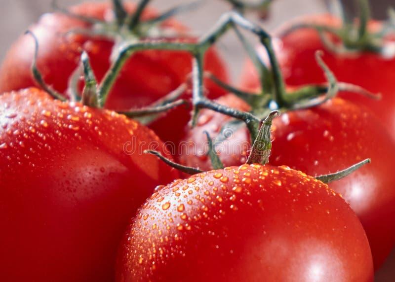 Μακρο φωτογραφία των ώριμων κόκκινων ντοματών σε έναν κλάδο με τις πτώσεις του νερού υγιές λαχανικό στοκ φωτογραφία