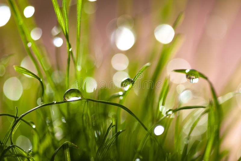 Μακρο φύλλα της χλόης με τη δροσιά στοκ φωτογραφία με δικαίωμα ελεύθερης χρήσης