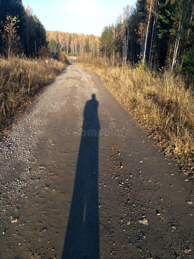 Μακρύς-μακριά ανθρώπινη σκιά στο δασικό δρόμο στο ηλιοβασίλεμα στοκ εικόνες