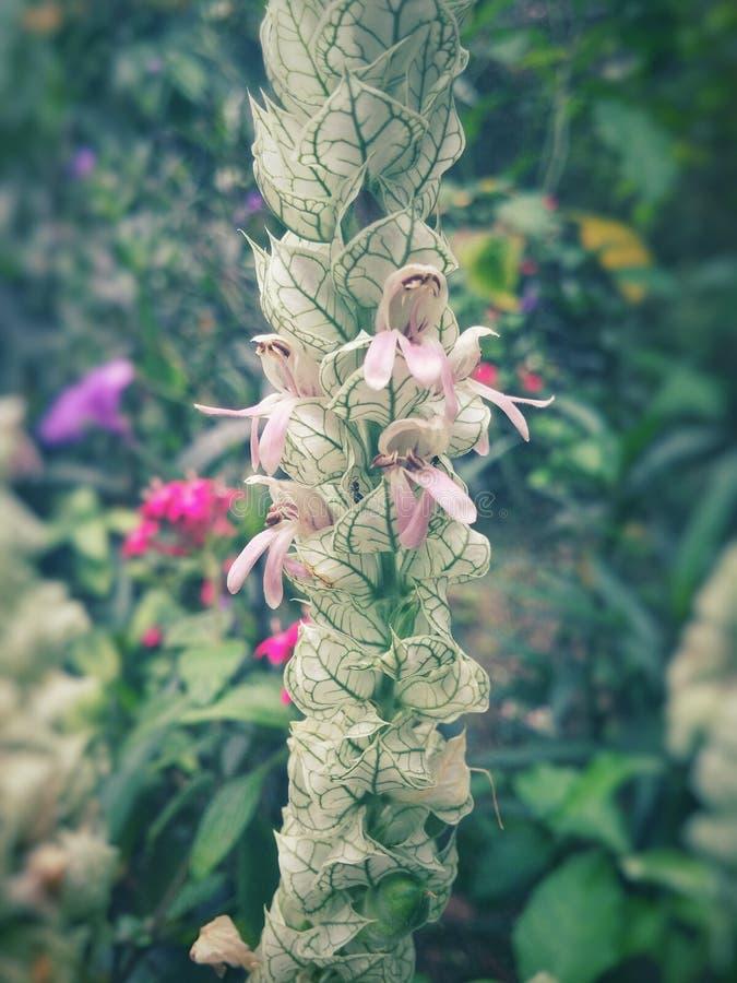 Μακρύ άσπρο λουλούδι με τις Πράσινες Γραμμές και βλάστηση στο υπόβαθρο στοκ φωτογραφίες
