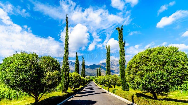 Μακρύ ευθύ Driveway μέσω ενός αμπελώνα κοντά σε Franschhoek στη δυτική επαρχία ακρωτηρίων της Νότιας Αφρικής στοκ εικόνες