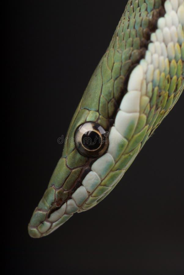 μακρύ μυρισμένο φίδι στοκ φωτογραφίες με δικαίωμα ελεύθερης χρήσης