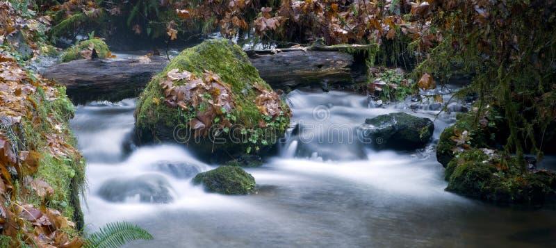 Μακρύ νερό έκθεσης που ρέει κάτω από τους καλυμμένους βρύο βράχους ρευμάτων στοκ φωτογραφία με δικαίωμα ελεύθερης χρήσης