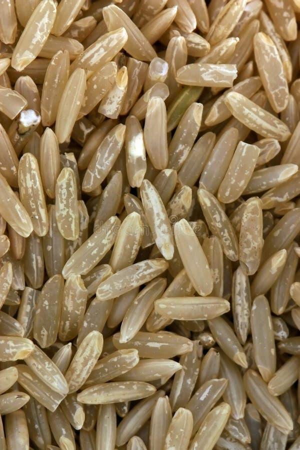 μακρύ ρύζι σιταριού στοκ φωτογραφία με δικαίωμα ελεύθερης χρήσης