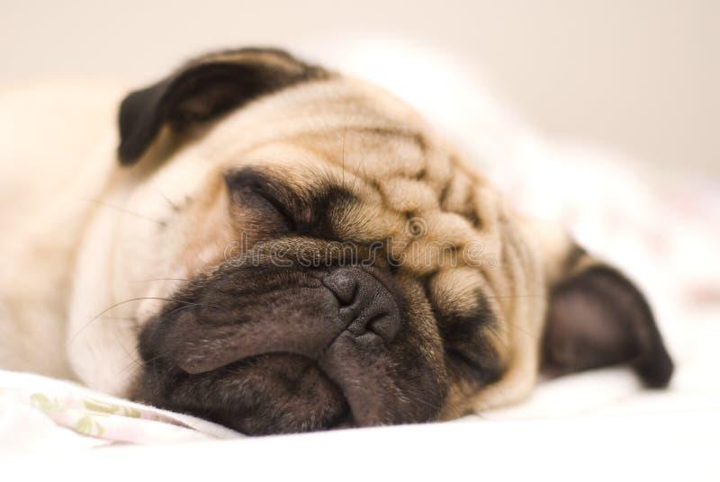 μαλαγμένος πηλός σκυλιών στοκ εικόνα