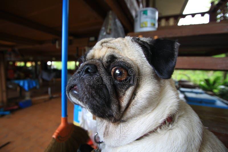 Μαλαγμένου πηλού στενός επάνω προσώπου σκυλιών αστείος στοκ φωτογραφία με δικαίωμα ελεύθερης χρήσης