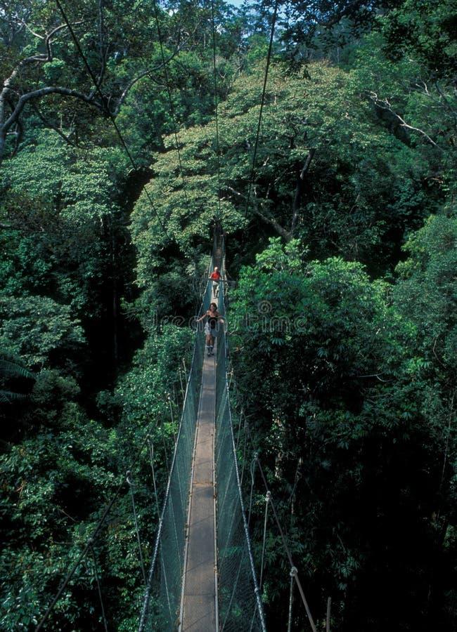 Μαλαισία: Περπάτημα πέρα από την κρεμώντας γέφυρα πέρα από το τροπικό δάσος στοκ φωτογραφίες