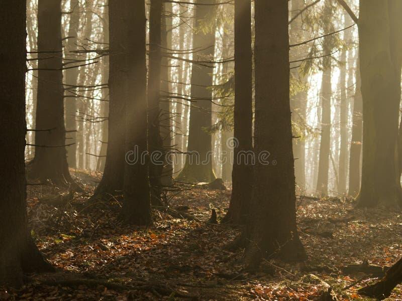 Μαλακά ελαφριά περάσματα πρωινού μεταξύ των threes στοκ φωτογραφία