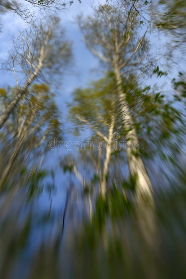 Μαλακά πράσινα φύλλα στοκ εικόνες με δικαίωμα ελεύθερης χρήσης