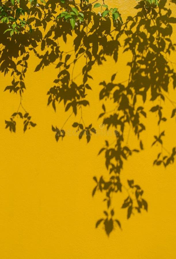 Μαλακή εικόνα εστίασης Κίτρινο σκυρόδεμα τοίχων grunge με το φως του ήλιου, σκιά του πράσινου υποβάθρου φύλλων στοκ εικόνα με δικαίωμα ελεύθερης χρήσης