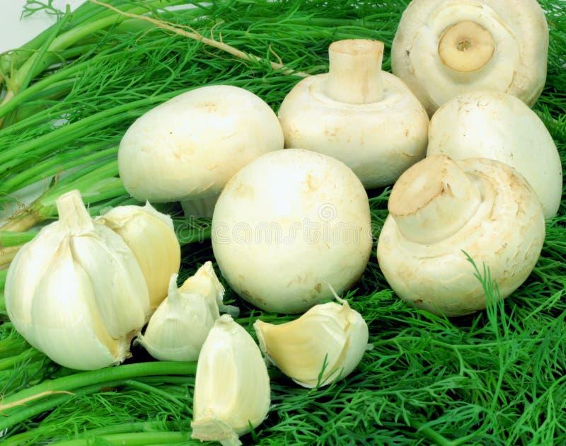 μανιτάρια σκόρδου άνηθου πέρα από το λευκό κλαδακιών στοκ εικόνες με δικαίωμα ελεύθερης χρήσης