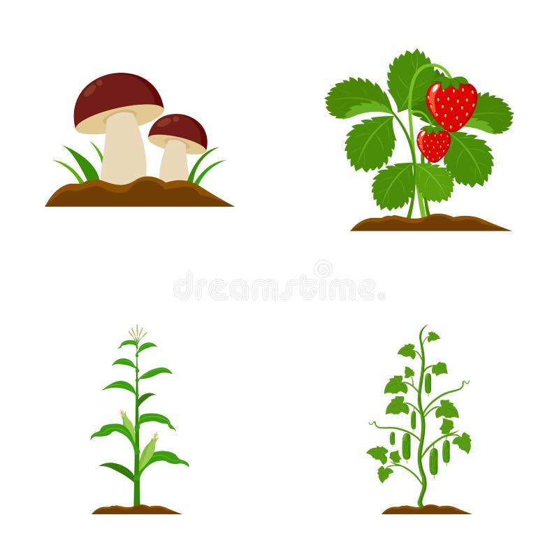 Μανιτάρια, φράουλες, καλαμπόκι, αγγούρι Καθορισμένα εικονίδια συλλογής εγκαταστάσεων στο διανυσματικό Ιστό απεικόνισης αποθεμάτων διανυσματική απεικόνιση
