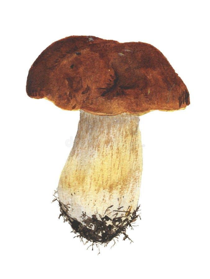 Μανιτάρι Watercolor διανυσματική απεικόνιση