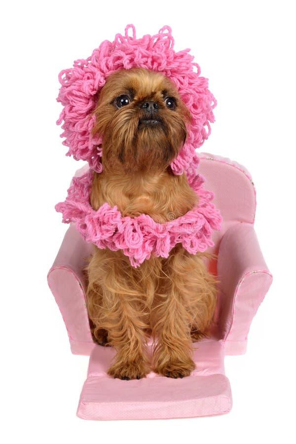μαντίλι καπέλων σκυλιών σπ& στοκ φωτογραφία με δικαίωμα ελεύθερης χρήσης