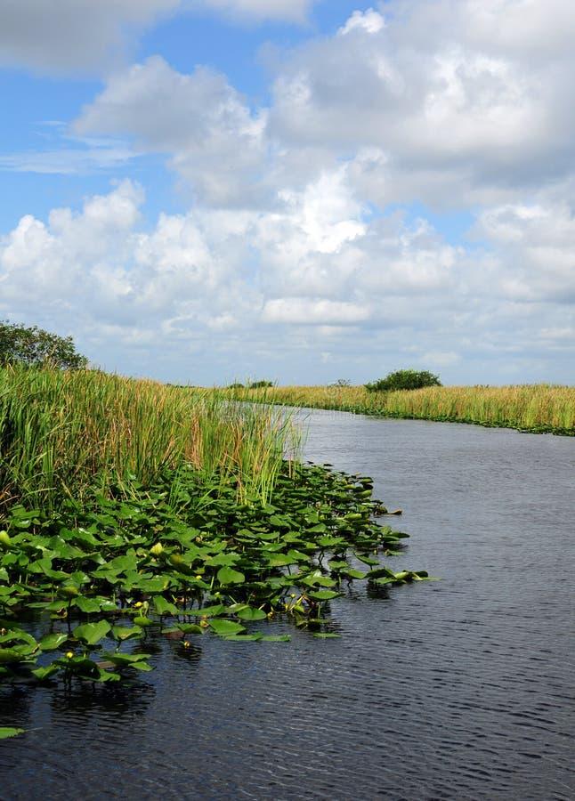 Μαξιλάρια κρίνων στο έλος στη Φλώριδα everglades στοκ φωτογραφίες