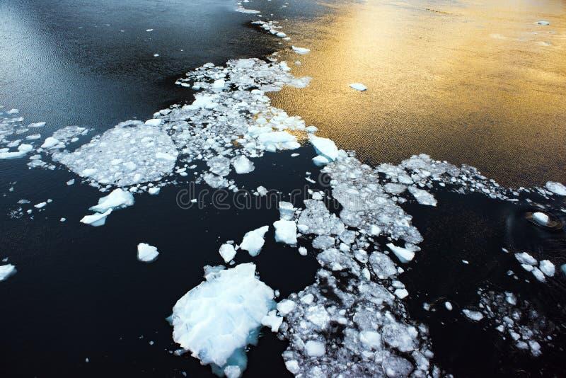Μαργαριτάρια που αφήνονται στην επιφάνεια της θάλασσας, ανταρκτική στοκ εικόνες με δικαίωμα ελεύθερης χρήσης