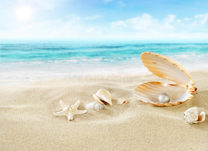 Μαργαριτάρι στην παραλία στοκ φωτογραφία με δικαίωμα ελεύθερης χρήσης