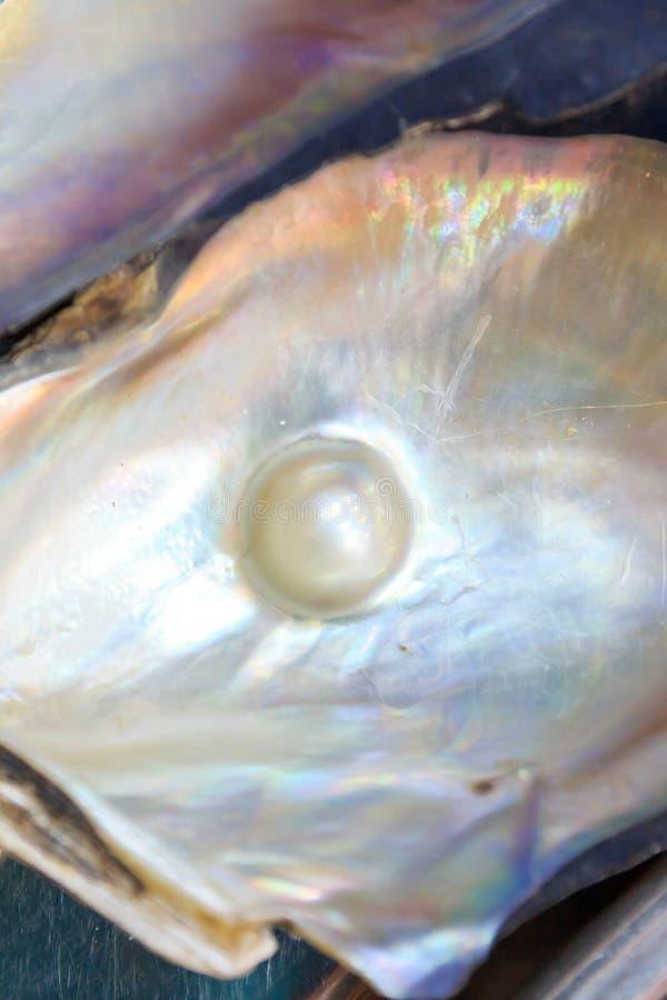 Μαργαριτάρι στο κοχύλι στοκ φωτογραφία με δικαίωμα ελεύθερης χρήσης