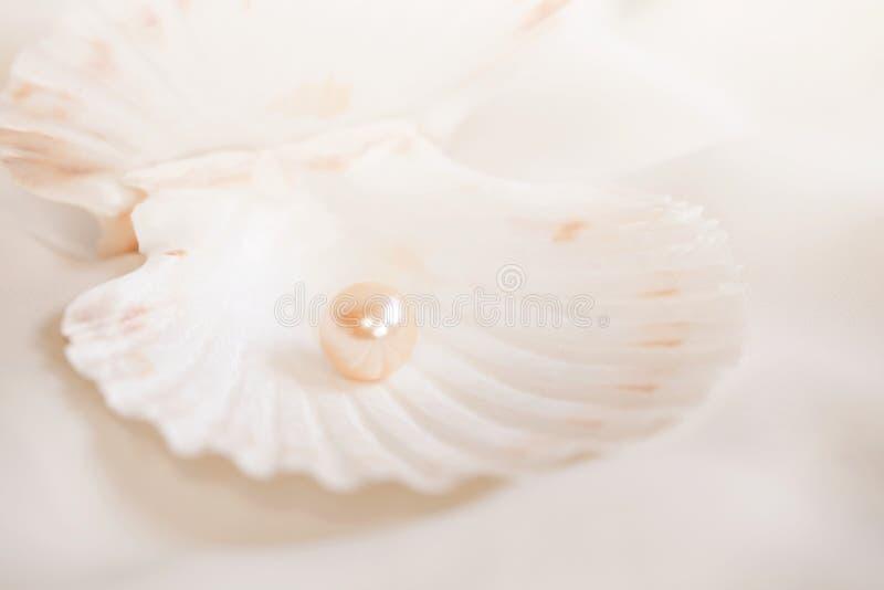 μαργαριτάρι στοκ φωτογραφία