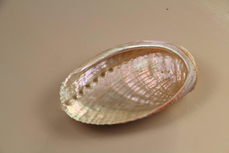 Μαργαριταρένιο θαλασσινό κοχύλι σε έναν πίνακα στοκ εικόνες με δικαίωμα ελεύθερης χρήσης