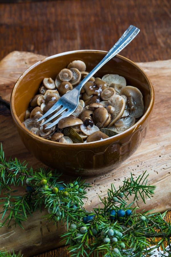 Μαριναρισμένος μύκητας μελιού στο καφετί κύπελλο στον ξύλινο πίνακα στοκ φωτογραφίες με δικαίωμα ελεύθερης χρήσης