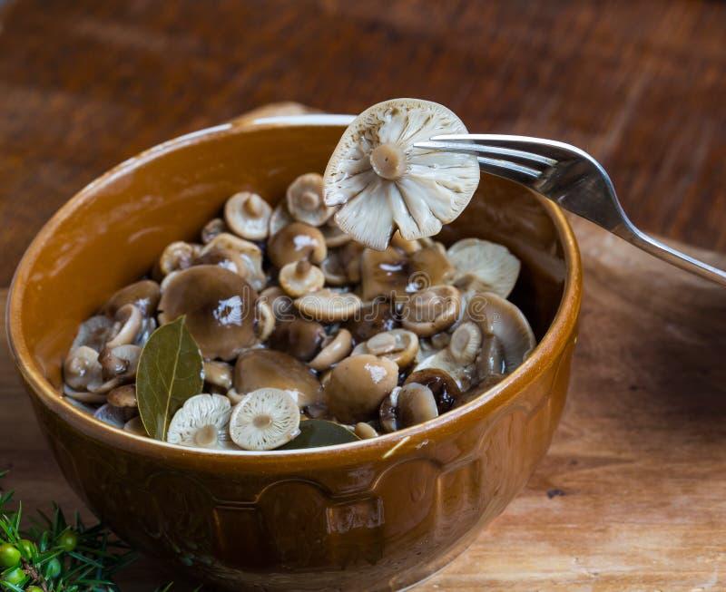 Μαριναρισμένος μύκητας μελιού στο καφετί κύπελλο στον ξύλινο πίνακα στοκ εικόνες με δικαίωμα ελεύθερης χρήσης