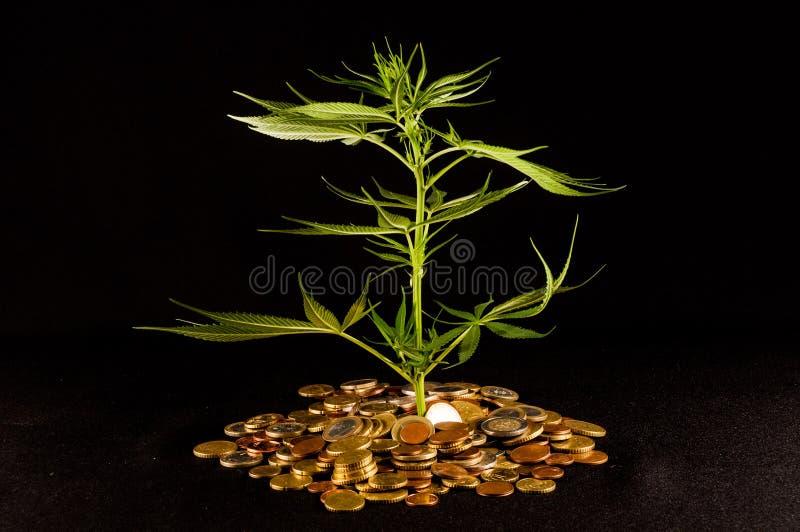 Μαριχουάνα και χρήματα στοκ εικόνες με δικαίωμα ελεύθερης χρήσης