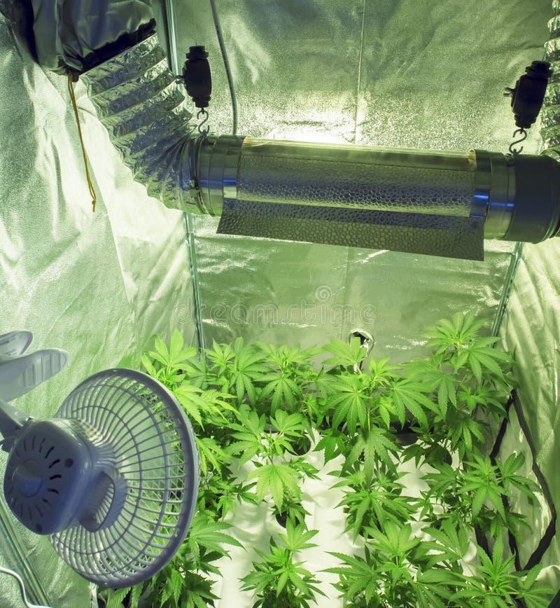 μαριχουάνα στοκ εικόνες
