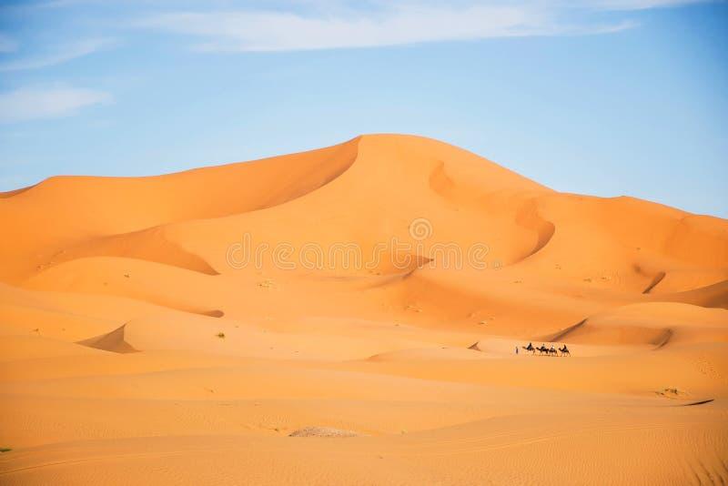 Μαροκινή έρημος, merzouga shara Να εξισώσει landsccape Τεράστιος αμμόλοφος με το τροχόσπιτο καμηλών Φυσικοί αμμόλοφοι άμμου τοπίω στοκ φωτογραφίες