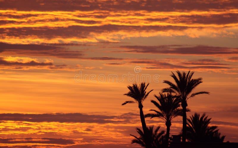 Μαροκινό ηλιοβασίλεμα - κοντά στο Μαρακές στοκ εικόνες με δικαίωμα ελεύθερης χρήσης