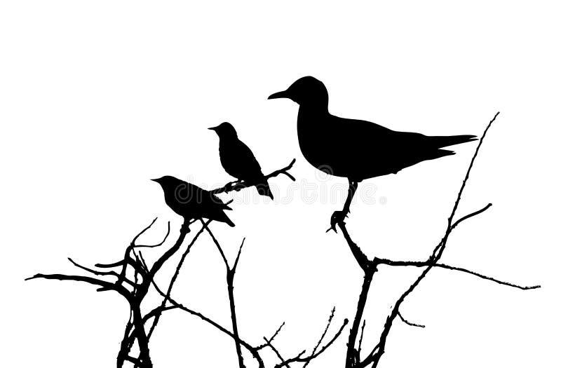 Μαυροκέφαλοι γλάρος και ψαρόνια στη σκιαγραφία κλάδων διανυσματική απεικόνιση