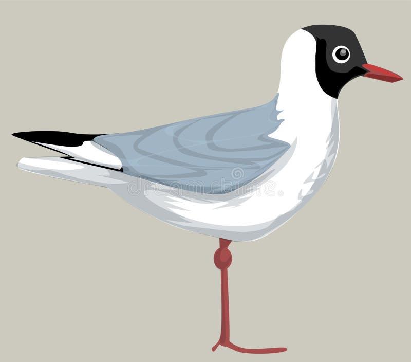 Μαυροκέφαλος γλάρος διανυσματική απεικόνιση