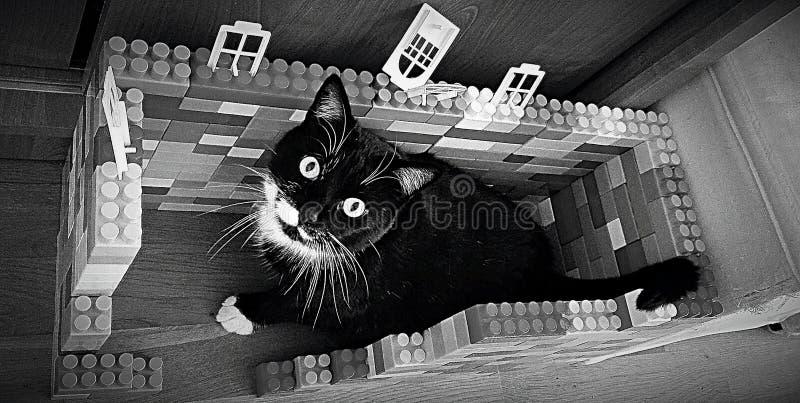 ΜΑΥΡΟ bw Lego ΓΑΤΩΝ στοκ εικόνες