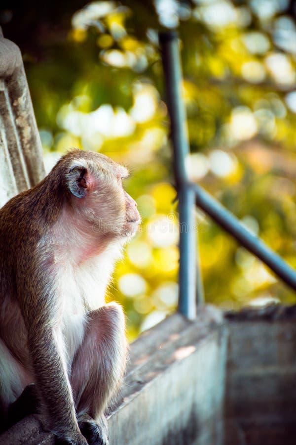 Μαϊμού μόνη στη μέση πόλη Ευτυχία στοκ φωτογραφίες